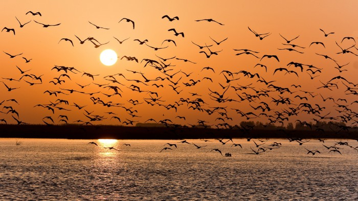 flock-of-birds-at-sunset